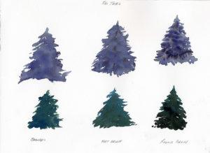 fir trees in watercolor