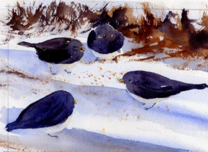 Small Flock Of Slate Colored Juncos - Watercolor Painting Lesson