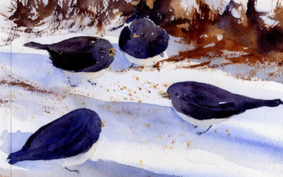 Small Flock Of Slate Colored Juncos – Watercolor Painting Lesson