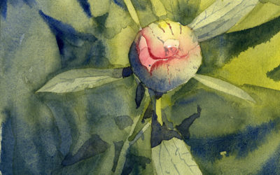 How To Paint A Peony Bud – Watercolor Painting Lesson