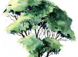 Late Summer Tree In Watercolor